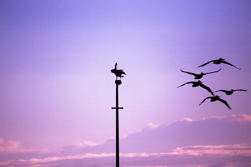flyfree.jpg
