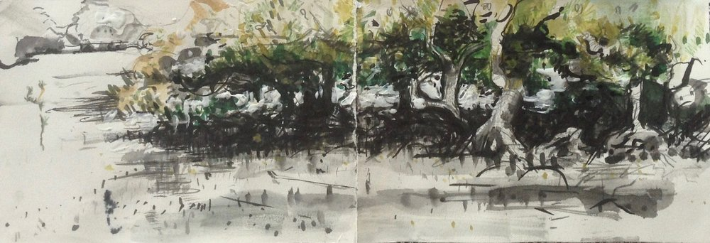 Jo Kaspari. Mangroves, looking eastward