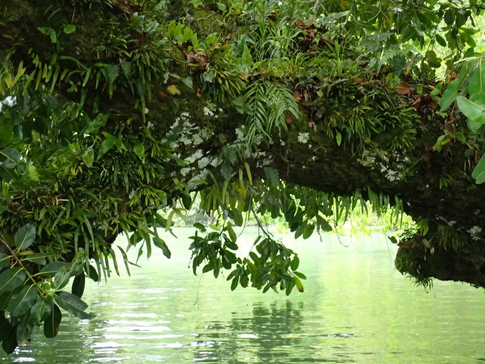 Hut  tree.JPG