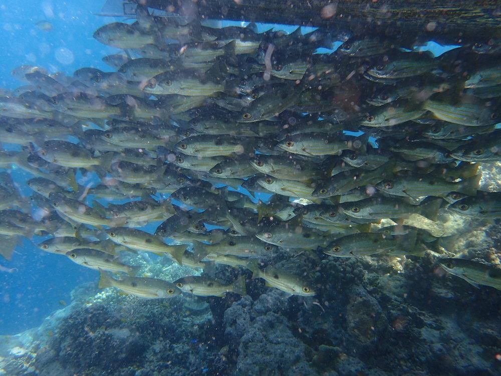 Fish under boat 2.JPG