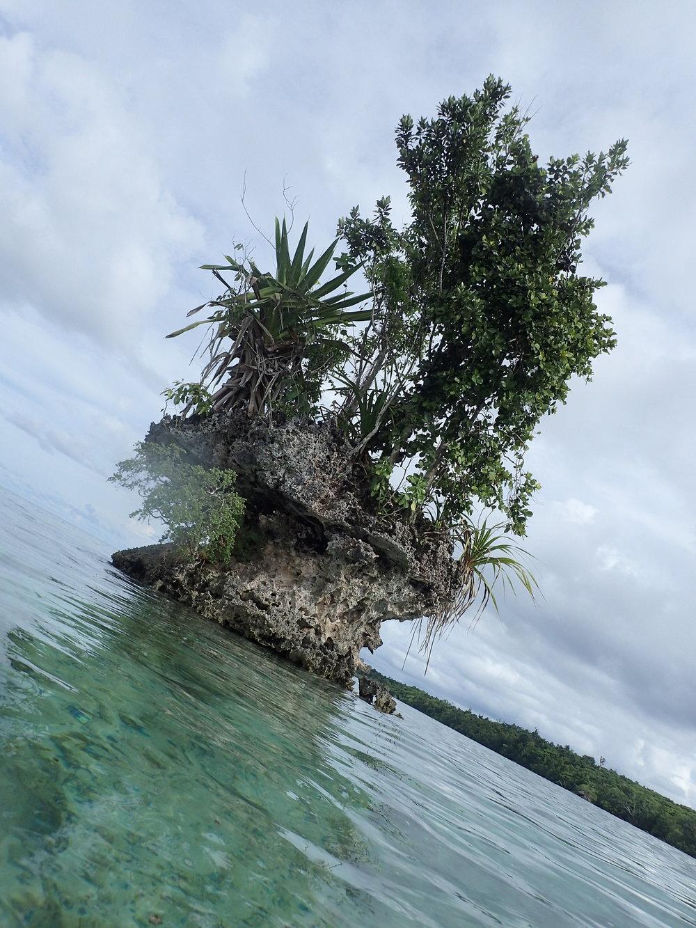 lil Island 1.JPG