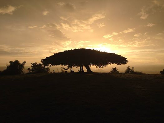 Puert Tree 2.jpg