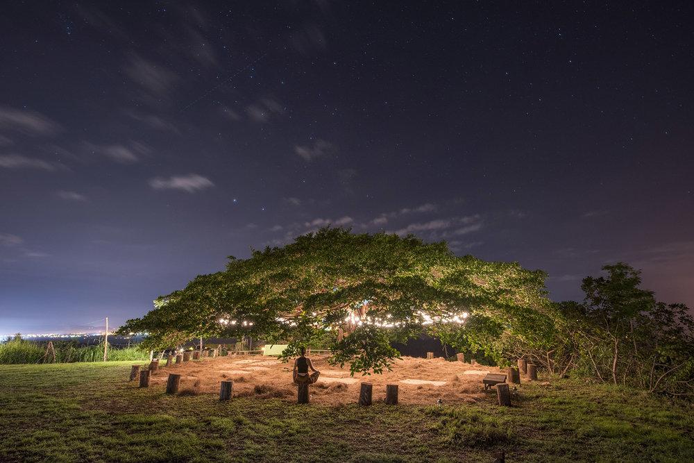 Vida Tree