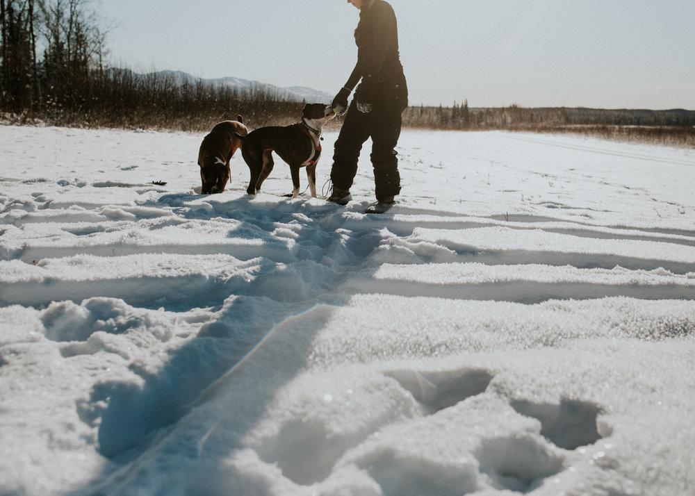 alaskan boxers in snow