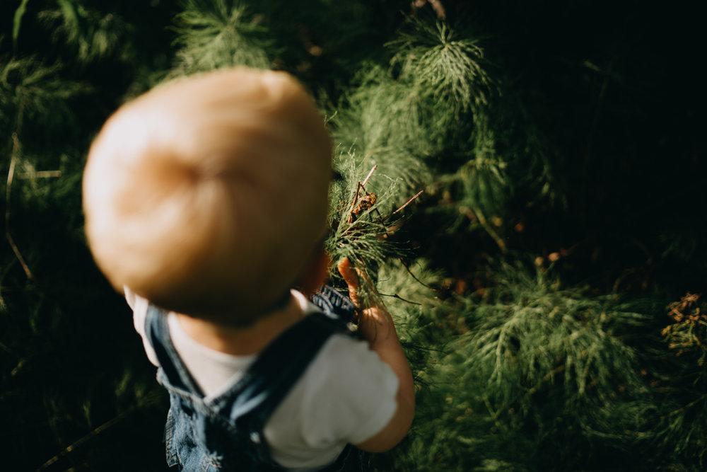 wasillafamilyphotographer100.jpg