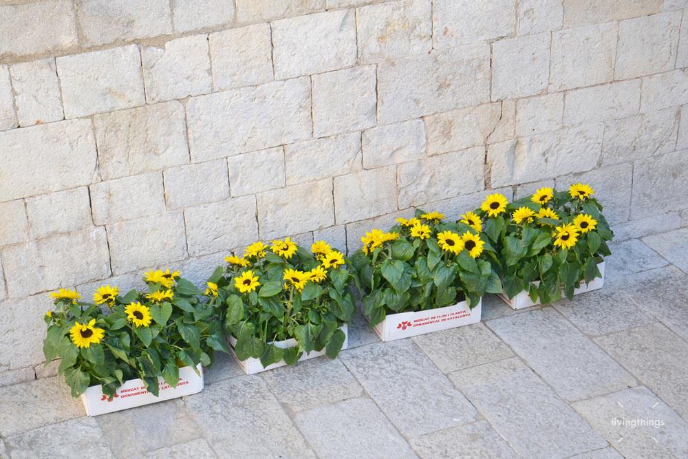 Voltasol-Girona-temps-de-flors-2014-02.jpg