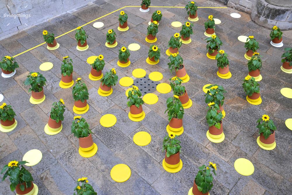 Livingthings-voltasol-temps-de-flors-2014-05.jpg