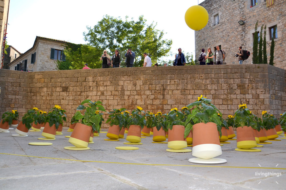 Livingthings-voltasol-temps-de-flors-2014-09.JPG