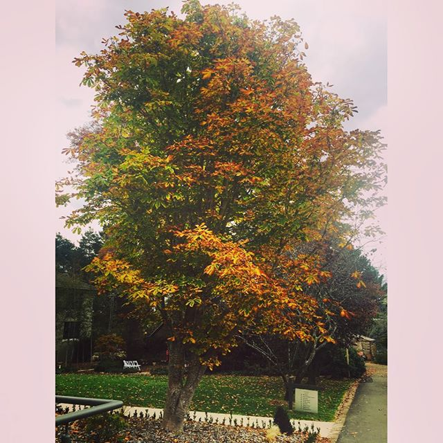Bowral Autumn 🍃🍁🍂... The perks of being a mobile makeup & hair artist... #mobilebridalhairandmakeup #bellealluremakeup #belleallurebridal #ilovemyjob