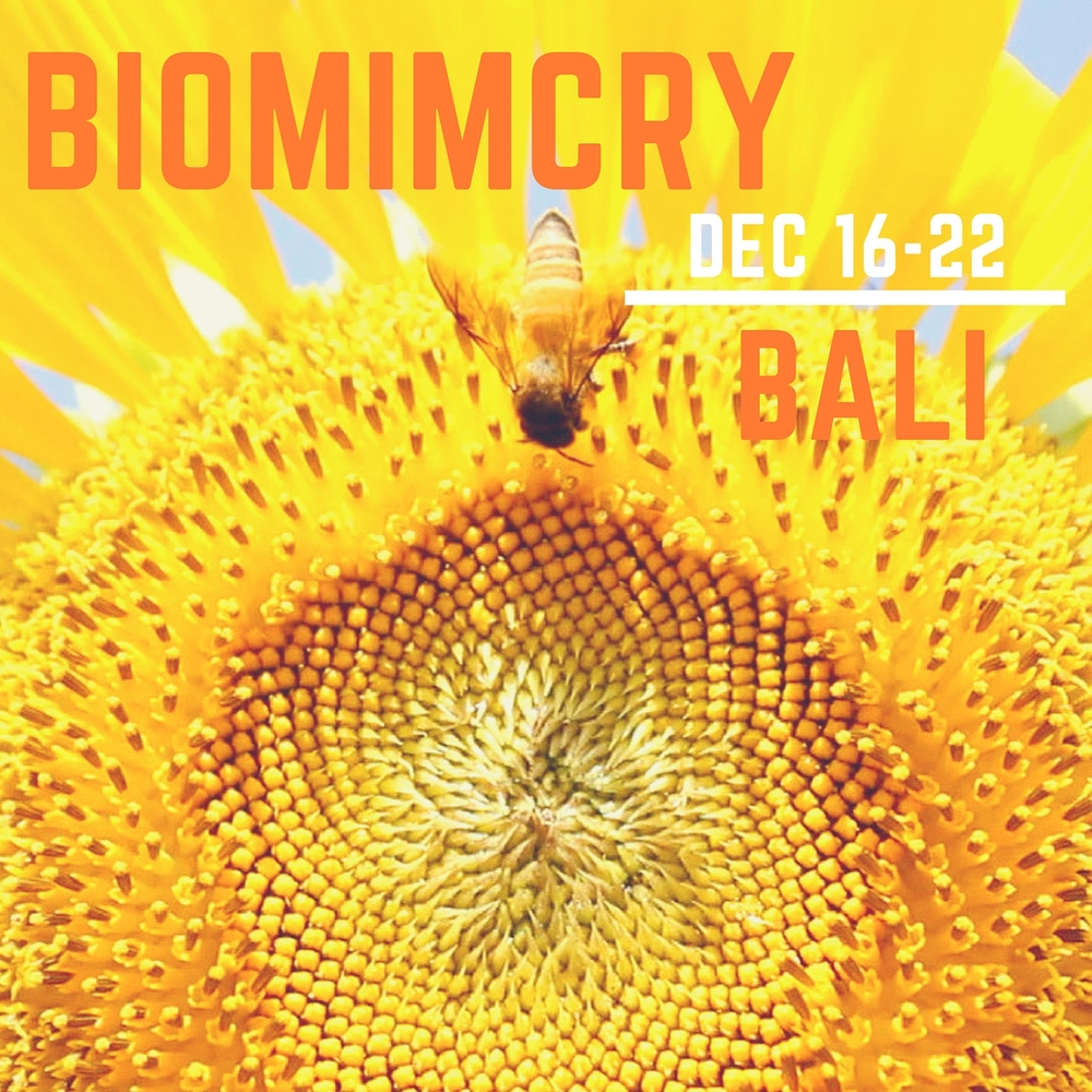 Pure_Immersions_Collaboration_Retreat_Biomimcry_Bali.jpg