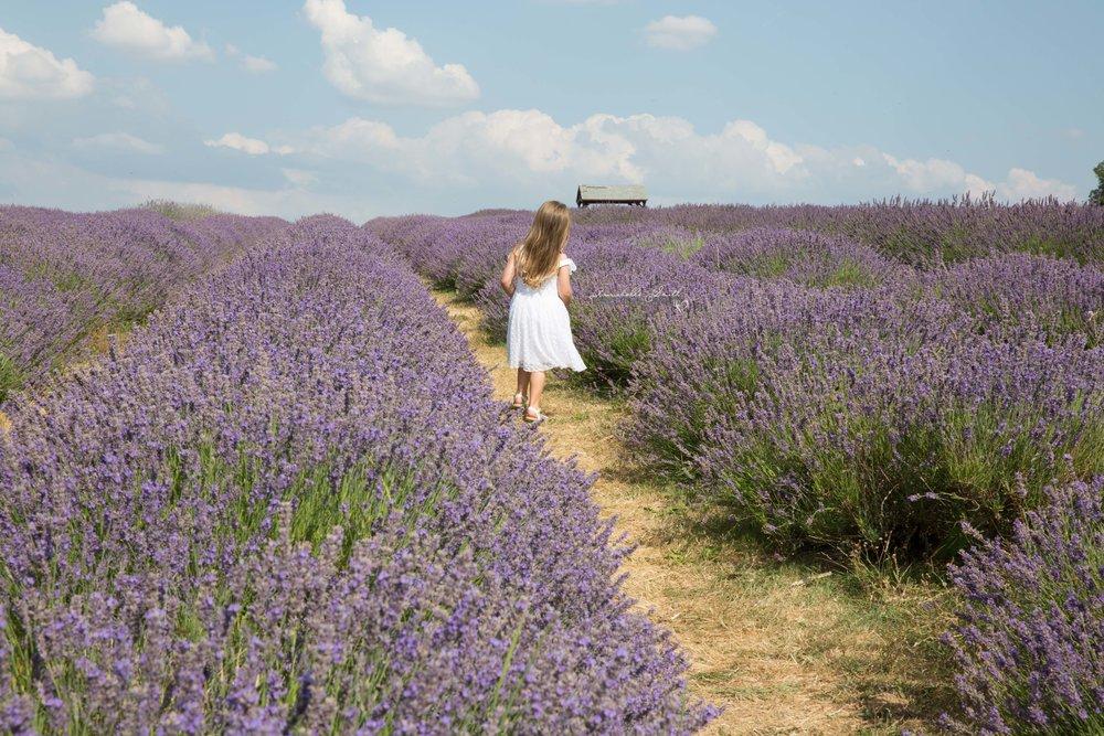 Lavender Field Photography surrey2.JPG