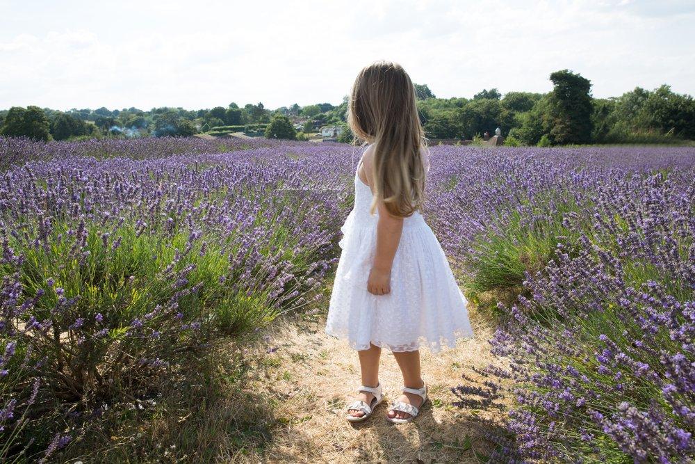 Lavender Field Photography surrey1.JPG