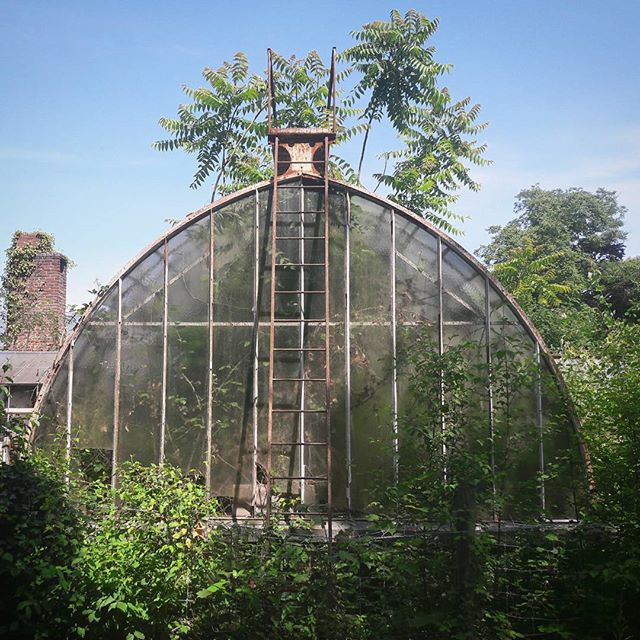 #old #tropical #greenhouse #paris #garden