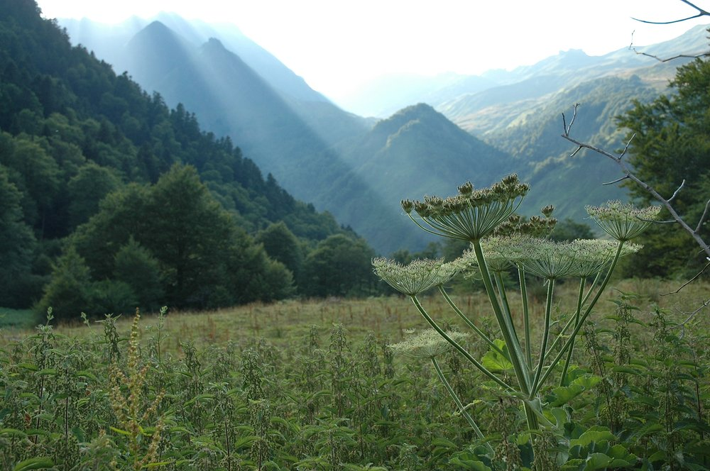 Vallée d'Ossau - Pyrénées - France