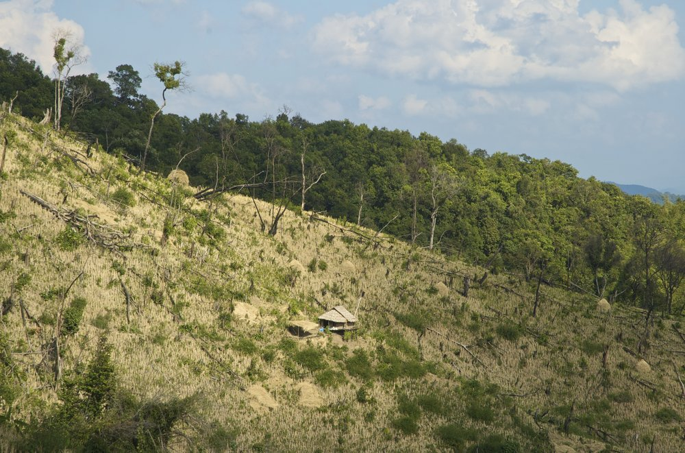 Deforestation in Laos jungle