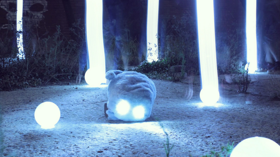 all-india-radio-cat-lightpainting-video