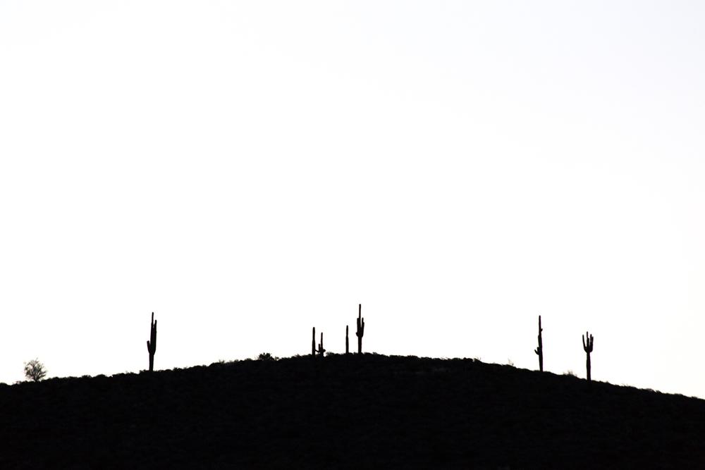 AVCalla-Saguaro-1.jpg
