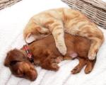 uhtpc-dog-cat-snuggles.jpg