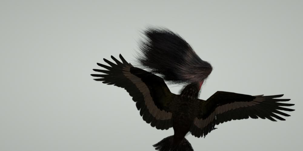 bird haar 2.png