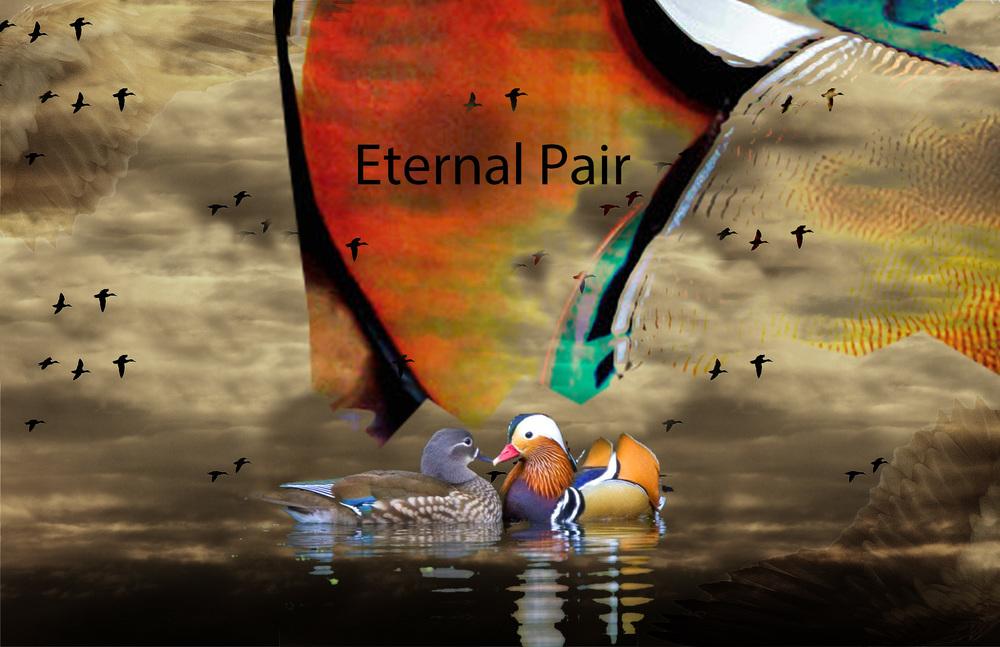 duck_mood_portfolio copy.jpg