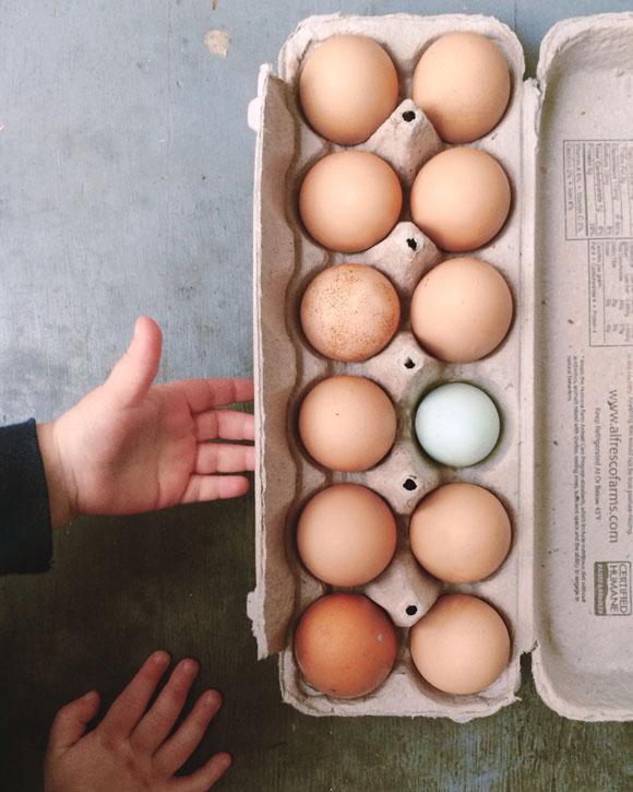 Maison Everett Blog, Raising Chickens in Your Backyard, Fresh Eggs