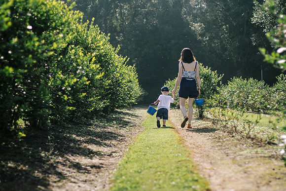 Maison Everett Blog, Blueberry Picking, Motherhood Musings, Thoughts on Life