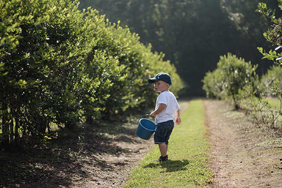 Maison Everett Blog, Blueberry Picking in Louisiana