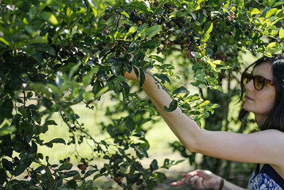 Maison Everett Blog, Blueberry Picking in Louisiana