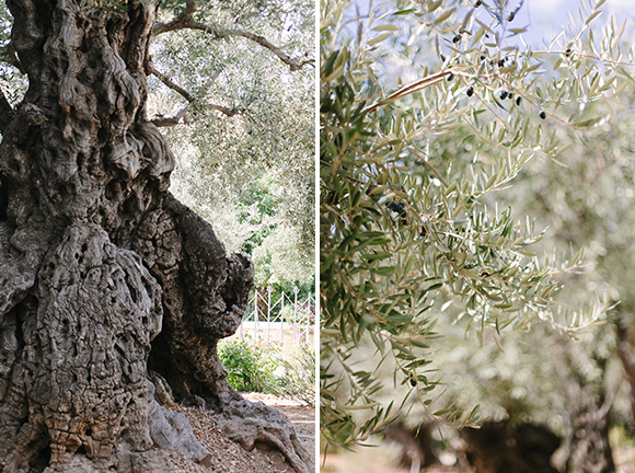 The Garden of Gethsemane, Mount of Olives, Israel