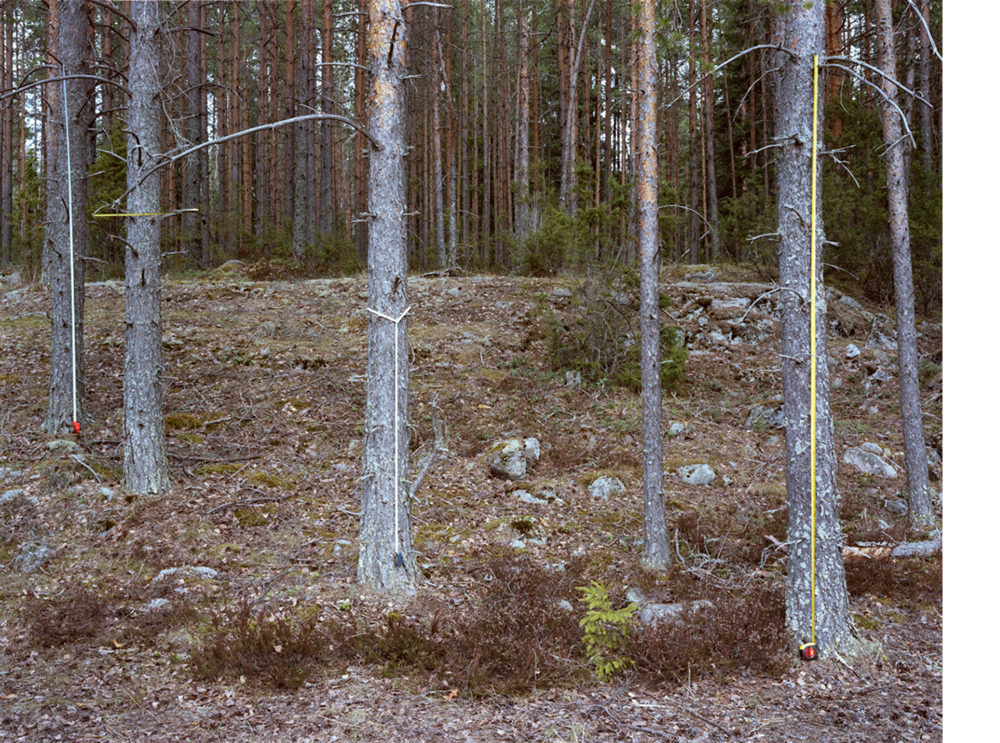 Minna Pöllänen,  Establishing an Average , from  Nature Trail,  2012