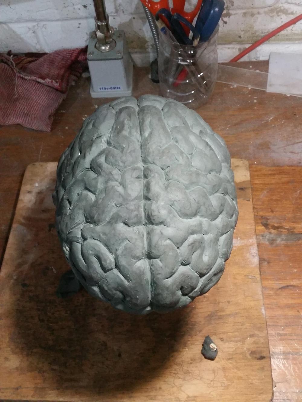 Emilio Chapela Cerebro en proceso
