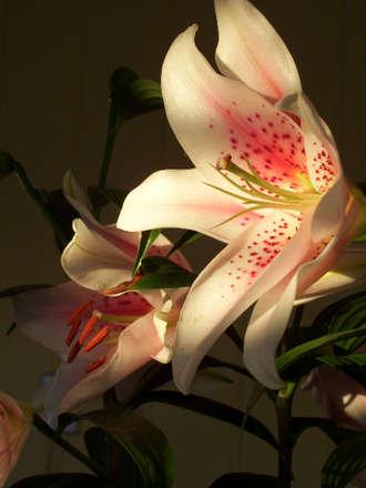 Lilies in Sunlight
