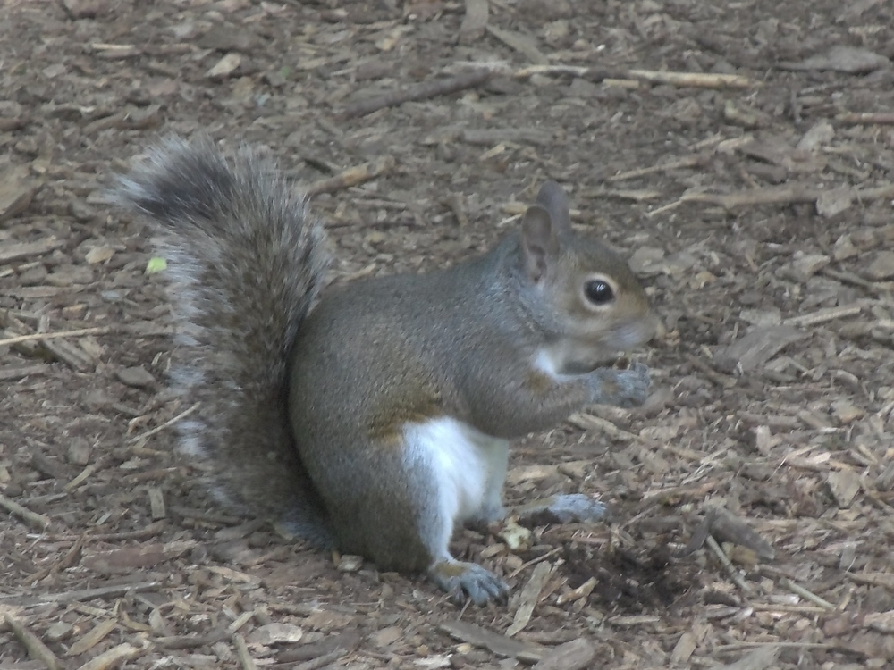 Squirrel Nutcase © Candy Paull
