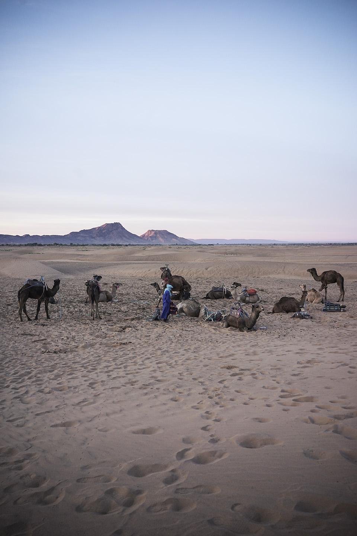 Desert Excursion_0023.jpg