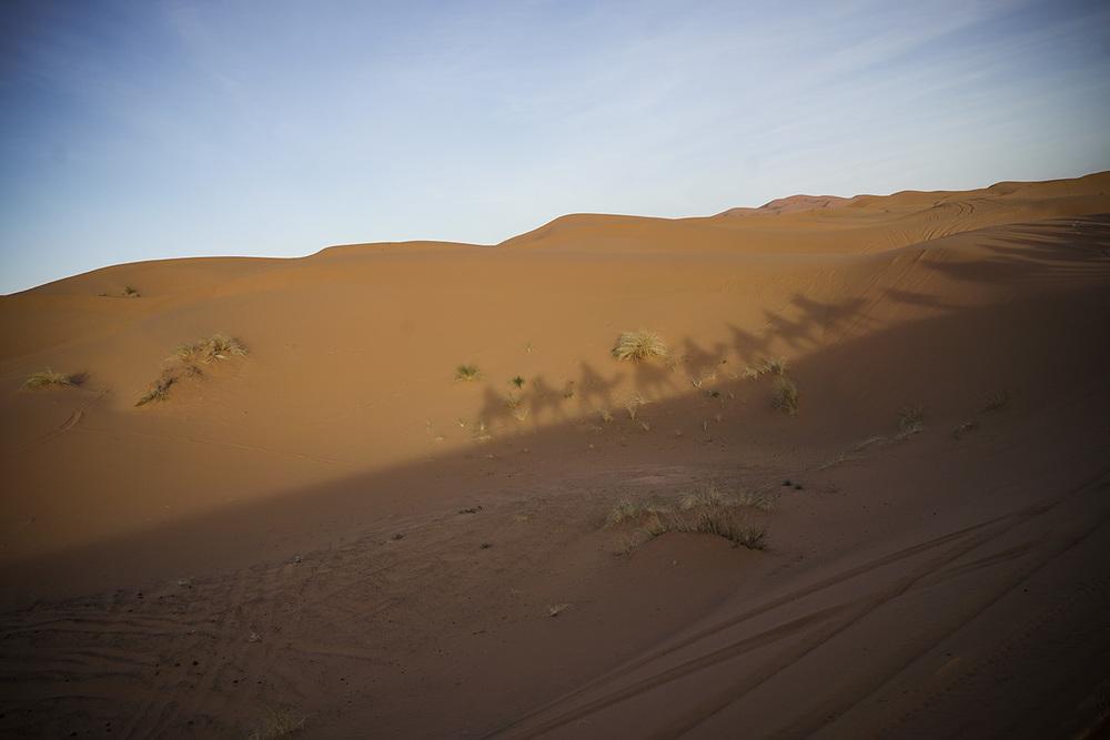 Desert Excursion_0071.jpg