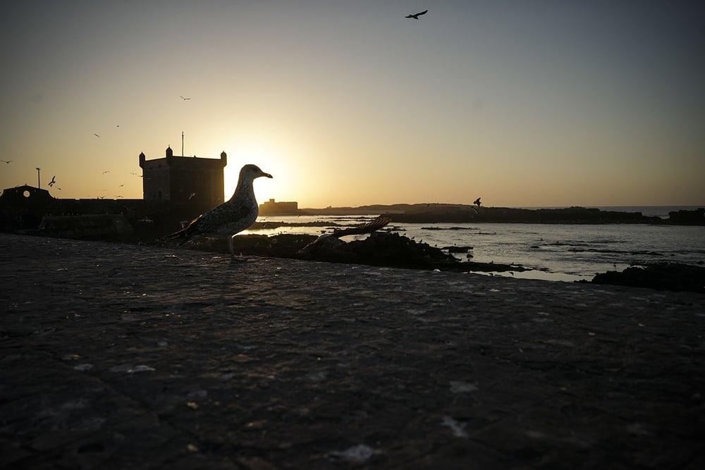 Essaouira_0013.jpg