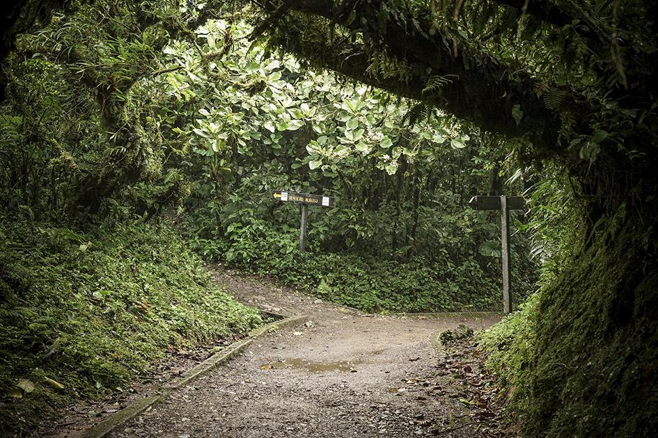 Monteverde_0020.jpg