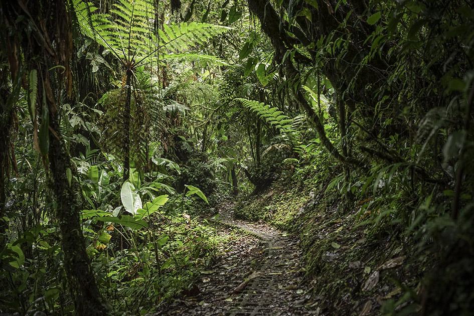Monteverde_0027.jpg