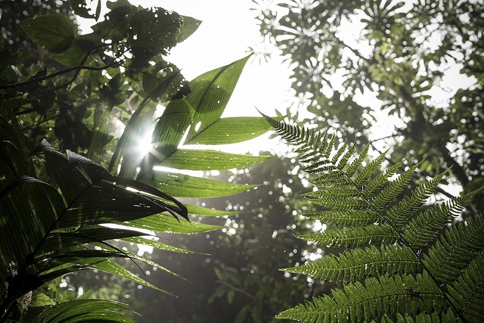 Monteverde_0030.jpg