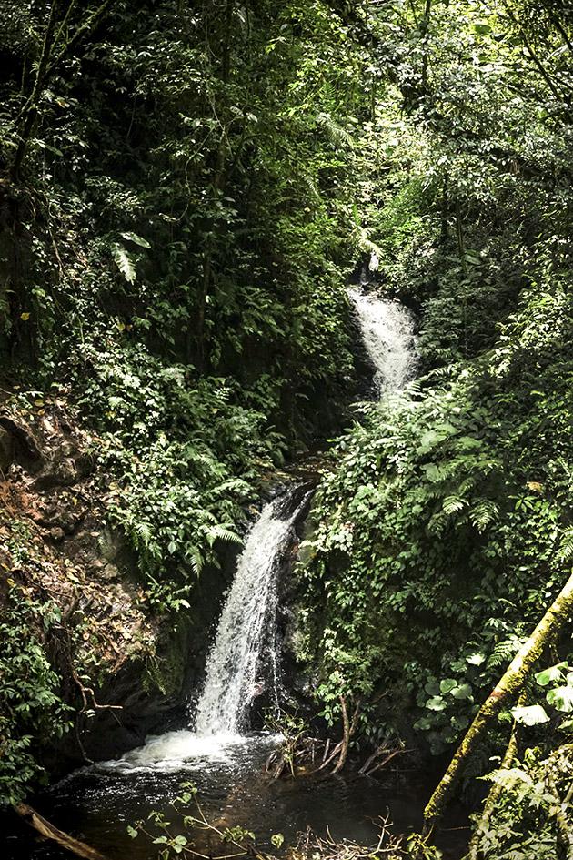 La cascada (Small waterfall in Monteverde Cloud Forest)