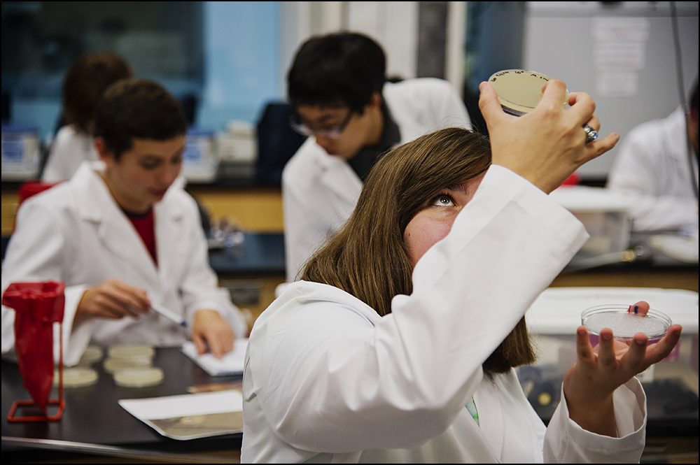 Elizabeth Pulsifer a junior at Gatton Academy from Boone County, examines a petri dish during a class at Western Kentucky University on Tuesday, September 9, 2014. The class, Genome Discovery and Explorations, puts students at Gatton in the same classroom as students at WKU. By Brian Powers, Special to the CJ, 09/09/2014