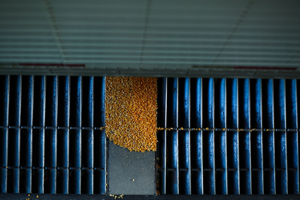 Corn is unloaded from a semi at the West Central Co-Op in Adair on Wednesday, November 04, 2015 in Adair.