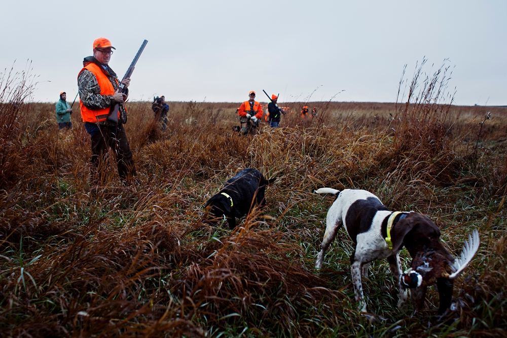 A dog retrieves a bird as Republican presidential candidate Rick Santorum walks through the fields as he hunts pheasants at The Hole N the Wall Lodge on Saturday, October 31, 2015 in Akron, Iowa.