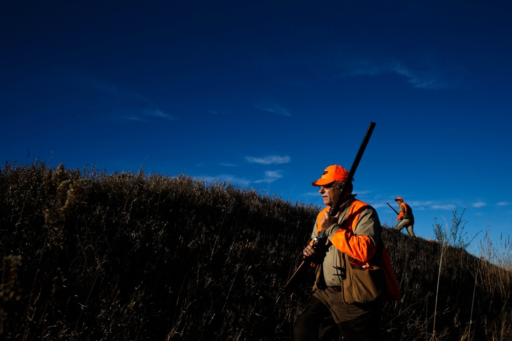 Congressman Steve King walks through the fields during the Col. Bud Day Pheasant Hunt at The Hole N the Wall Lodge on Saturday, October 31, 2015 in Akron, Iowa.