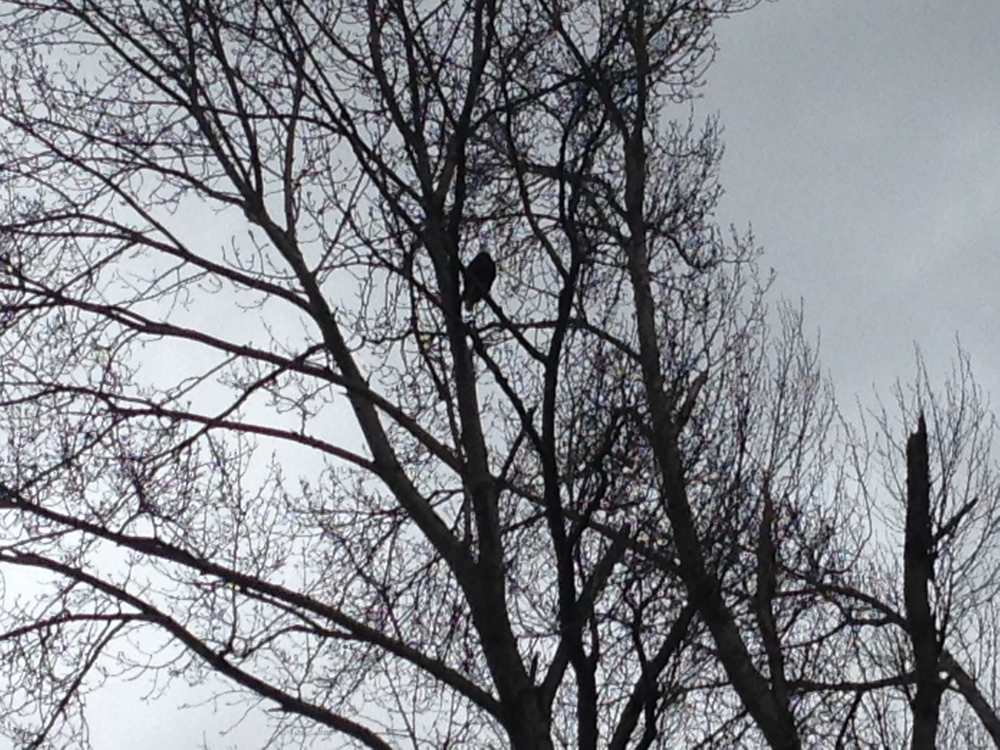 There were lots of eagles in the area.