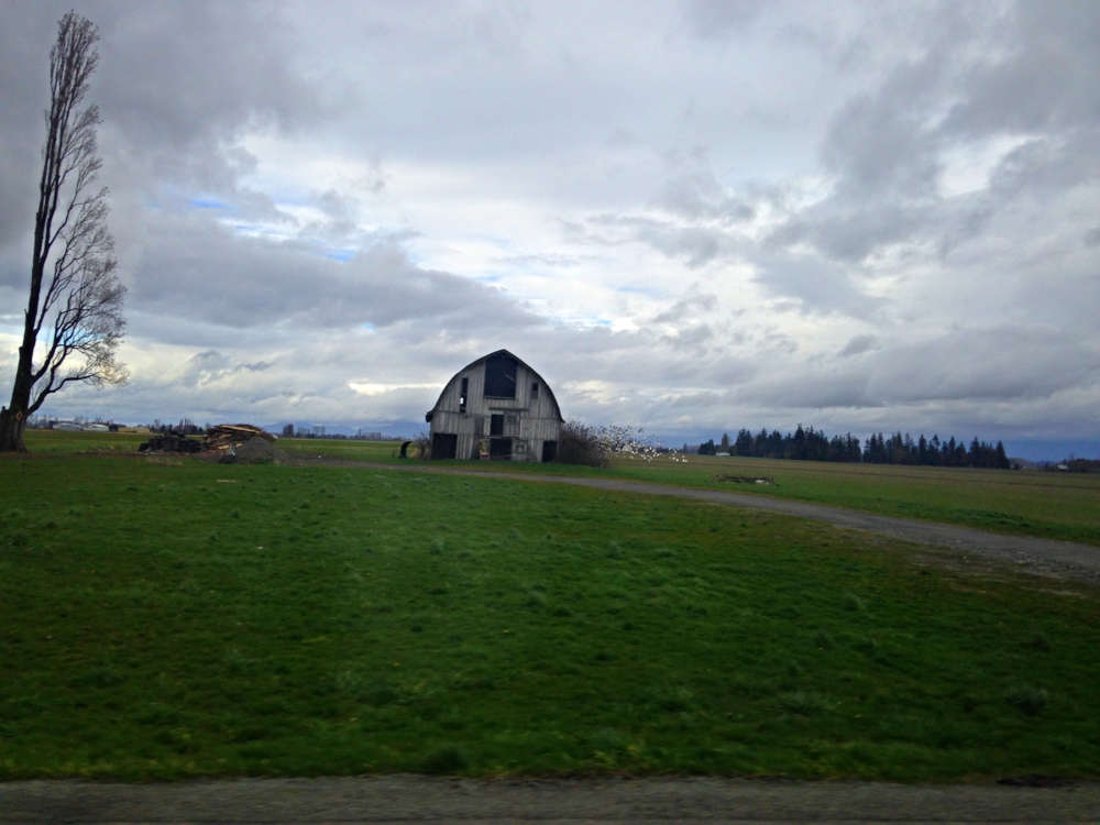 Can you see the flock of snow geese take off on the right side of the barn?