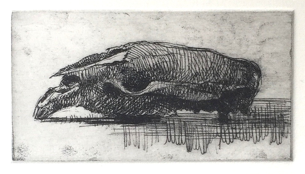 SLE 102 (wombat's skull), 2015, soft ground etching on Hahemühle paper, 75 x 145mm, edition of 10