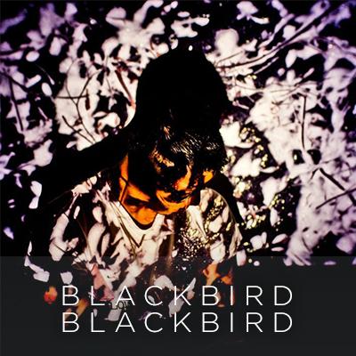 omartist_new_blackbird.jpg