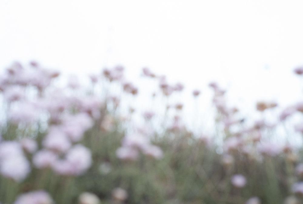 Wild Flowers , Porth Island