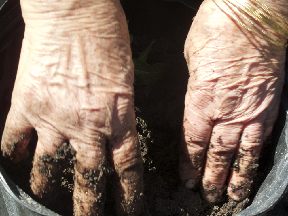 Plant medicines for a lineage: my maternal grandmother's plant tending hands.